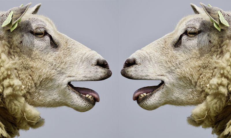 Dialogar o pontificar ¿qué le da más lustre al ego?